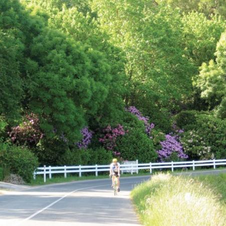 Best bike rides in Adelaide - Adelaide Hills